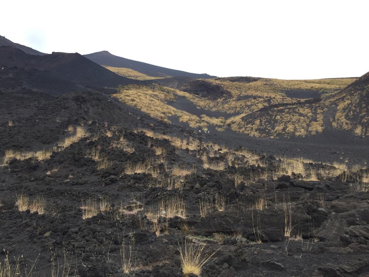62 etna vegetation 1